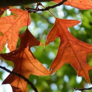 Parenthèse Bien-Etre : automne