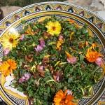 Parenthèse Bien-Etre : salade sauvage